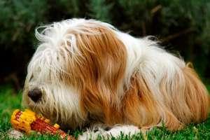 训养犬的基本工具